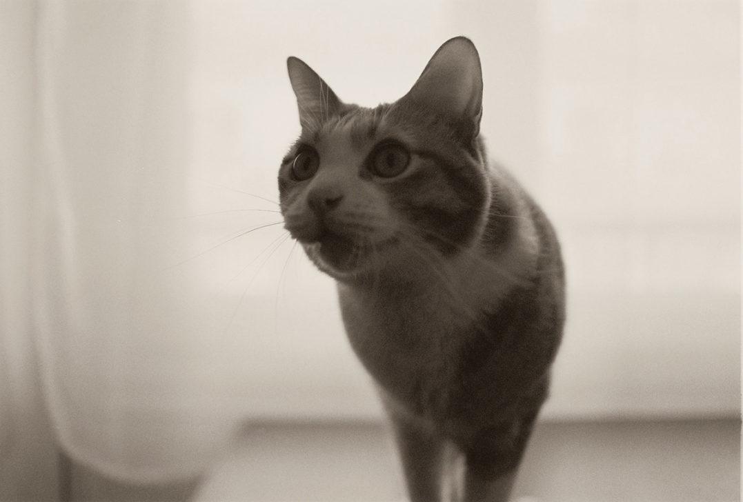 look-cat2
